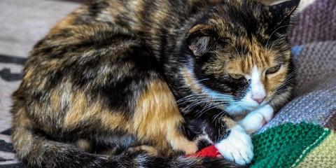 cat-509531_640