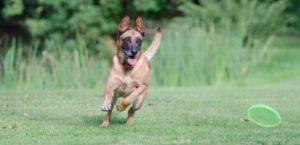 running-dog-672641_960_720