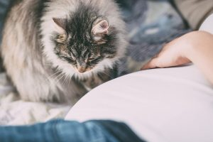 Élevage de chiens, chats et furets à Chambéry